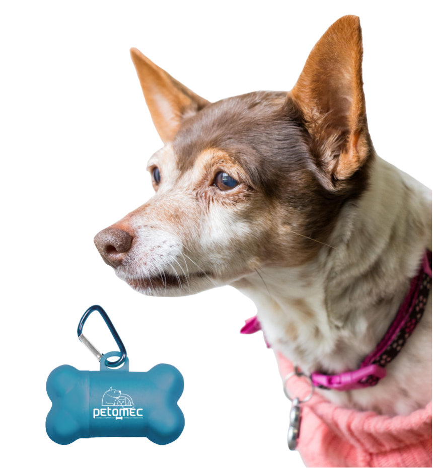 Pet Accessories with Your Logo