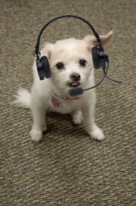Cute Peaches Dog with Headset